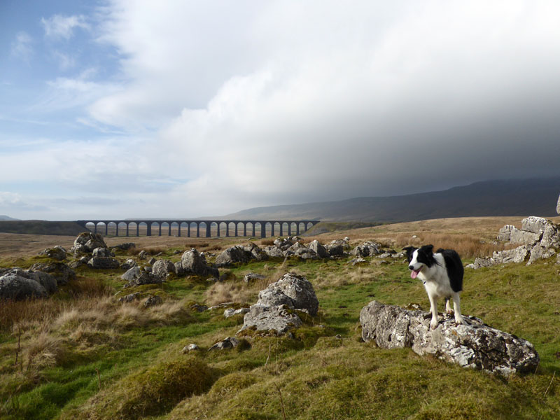 Ribblehead Bridge